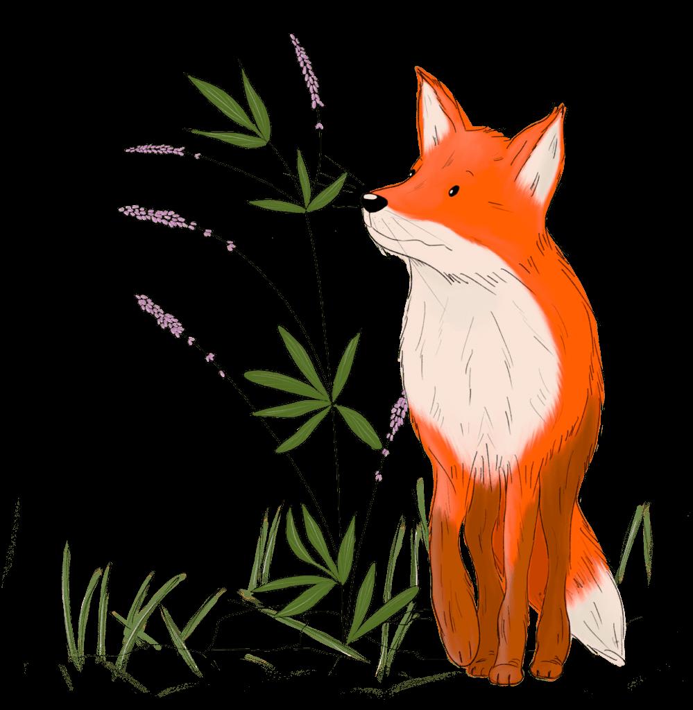 Illustration eines Fuchses, der Waldo Waldläufer heißt