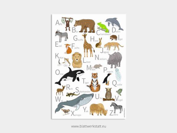 ABC-Plakat oder Alphabet Tierposter in 50 mal 70 cm