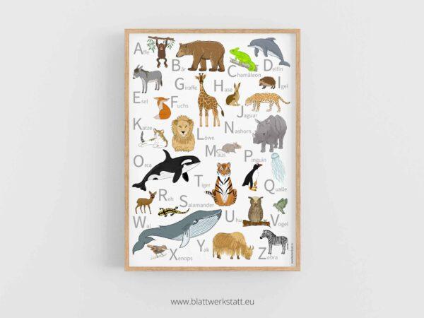 ABC-Plakat oder Alphabet Tierposter in 50 mal 70 cmim Rahmen