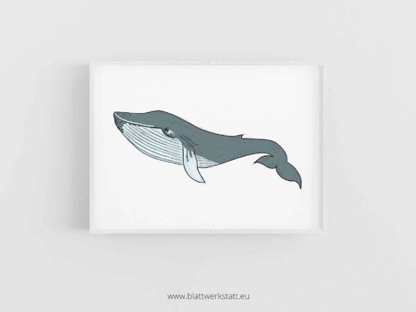 Tierposter A4, Plakat mit Wal im Rahmen