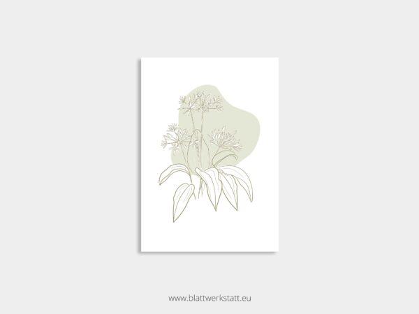 Postkarte Baerlauch minimalistische Zeichnung